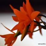 Flores003