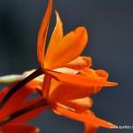 Flores007