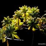 Flores014