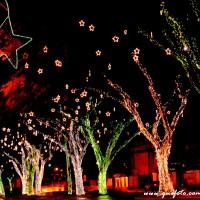 Luzes de Natal-38