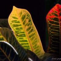 www.quefoto.com.br/rafael-pena