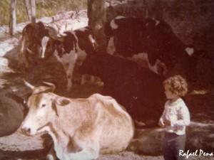 Eu no meio das vacas