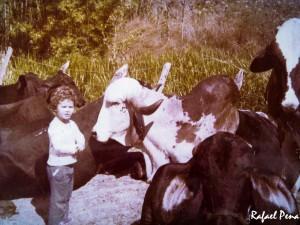 Eu no meio das vacas e bois